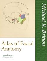 Portrait drawing facial anatomy