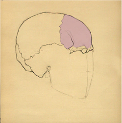 Portrait Drawing Lessons - The Skull-6