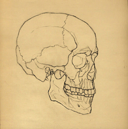 Portrait Drawing Lessons - The Skull-1